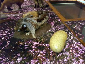 A representation of the wild haggis next to its culinary counterpart.